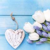 Tulipes blanches fraîches et h de fleur de muscaries et décoratif bleu Images libres de droits