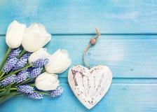 Tulipes blanches fraîches et h de fleur de muscaries et décoratif bleu Photo stock