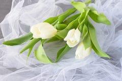 Tulipes blanches sur un tissu de lumière blanche Proue d'étoile bleue avec la bande bleue (enveloppe de cadeau) sur le fond blanc Photographie stock libre de droits