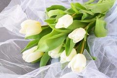Tulipes blanches sur un tissu de lumière blanche Proue d'étoile bleue avec la bande bleue (enveloppe de cadeau) sur le fond blanc Images stock