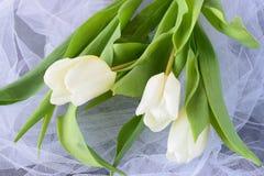 Tulipes blanches sur un tissu de lumière blanche Proue d'étoile bleue avec la bande bleue (enveloppe de cadeau) sur le fond blanc Photo stock