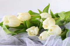 Tulipes blanches sur un tissu de lumière blanche Proue d'étoile bleue avec la bande bleue (enveloppe de cadeau) sur le fond blanc Images libres de droits