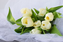 Tulipes blanches sur un tissu de lumière blanche Proue d'étoile bleue avec la bande bleue (enveloppe de cadeau) sur le fond blanc Photo libre de droits