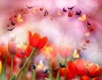 Tulipes colorées Photos stock