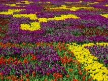 Tulipes colorées Photo libre de droits