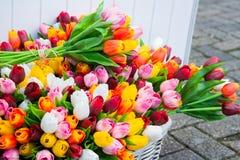 Tulipes colorées décoratives Images stock