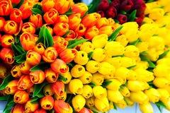 Tulipes colorées décoratives Photo stock