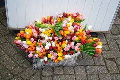 Tulipes colorées décoratives Photo libre de droits