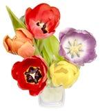Tulipes colorées dans un vase en verre Photo stock