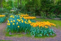 Tulipes colorées de jaune orange, parc de Keukenhof, Lisse en Hollande photographie stock libre de droits