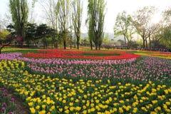 Tulipes colorées en ressort de jardin Image stock