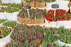 Tulipes colorées en vente Image stock