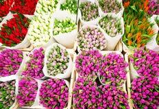 Tulipes colorées en vente Photographie stock libre de droits