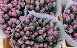 Tulipes colorées en vente sur le marché de fleur d'Amsterdam, Pays-Bas Photos libres de droits