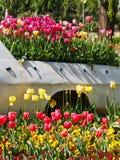 Tulipes colorées s'élevant derrière un camion photographie stock libre de droits