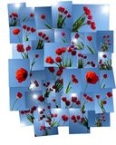 Tulipes contre le ciel bleu. illustration stock