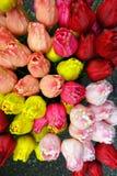 Tulipes d'Amsterdam à vendre Image libre de droits