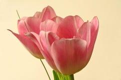 Tulipes d'anniversaire Image libre de droits