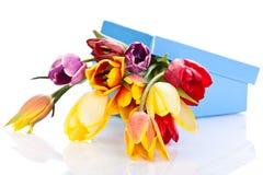 Tulipes d'isolement sur le fond blanc couleurs de beauté de ressort Photographie stock libre de droits