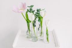 Tulipes dans des bouteilles sur le studio blanc de fond Image libre de droits