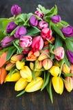 Tulipes dans des couleurs lumineuses Images libres de droits