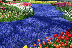 Tulipes dans Keukenhof Photos stock