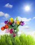 tulipes dans l'herbe photographie stock libre de droits