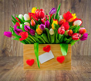 Tulipes dans la boîte photographie stock libre de droits