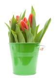 Tulipes dans la position photos libres de droits