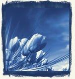 Tulipes dans le bleu de Delft Image libre de droits