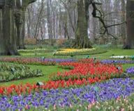 Tulipes dans le jardin avec des arbres Photographie stock