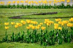 Tulipes dans le jardin de Tchèque Image libre de droits
