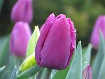 Tulipes dans le kapelpah de l'eau Photographie stock