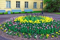 Tulipes dans le lit de fleur dans la vieille ville dans Ventspils Photos stock