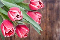Tulipes dans les baisses de la rosée sur le fond en bois Photographie stock libre de droits