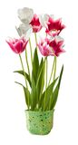 Tulipes dans un pot photographie stock libre de droits