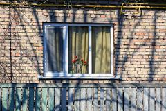 Tulipes dans un vase sur une fenêtre avec un mur de briques image libre de droits