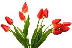 tulipes de bouquet Photographie stock
