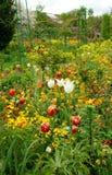 Tulipes de Colourfull au jardin de Monet dans Giverny image stock