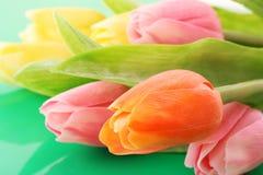 Tulipes de couleur Image libre de droits