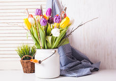 Tulipes de couleur dans la canne Photo stock
