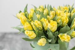 Tulipes de couleur jaune dans le vase vert Grands bourgeons des tulipes multicolores Contexte naturel floral Tulipes bicolores re Photographie stock