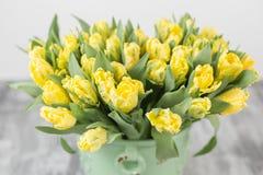 Tulipes de couleur jaune dans le vase vert Grands bourgeons des tulipes multicolores Contexte naturel floral Tulipes bicolores re Photo stock