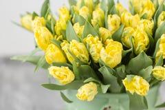 Tulipes de couleur jaune dans le vase vert Grands bourgeons des tulipes multicolores Contexte naturel floral Tulipes bicolores re Photos libres de droits