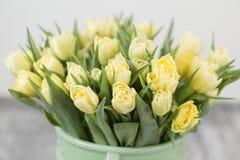 Tulipes de couleur jaune en pastel Grands bourgeons des tulipes multicolores Contexte naturel floral Photo remplie par tulipes bi Photos stock