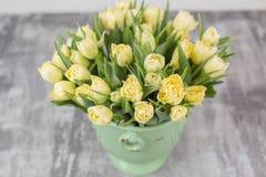 Tulipes de couleur jaune en pastel Grands bourgeons des tulipes multicolores Contexte naturel floral Photo remplie par tulipes bi Images libres de droits