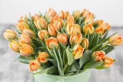 Tulipes de couleur orange dans le vase vert Grands bourgeons des tulipes multicolores Contexte naturel floral Tulipes bicolores r Photos stock