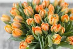Tulipes de couleur orange Grands bourgeons des tulipes multicolores Contexte naturel floral Photo remplie par tulipes bicolores Photo libre de droits