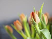 Tulipes de groupe Images stock