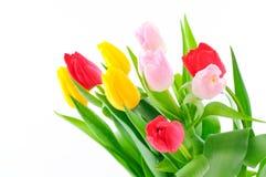 tulipes de groupe Photographie stock